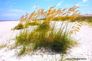 Tybee_Island_Beach Sea Oats_Melissa_P